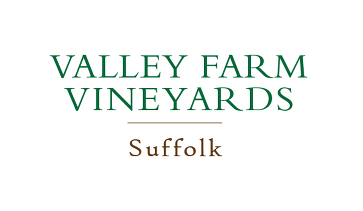 Valley Farm Vineyard, nr Halesworth, Suffolk